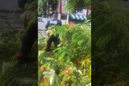 Flamboyán aplasta un auto en la avenida Alemán