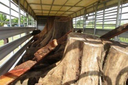 Incautan cargamento de madera en Tizimín