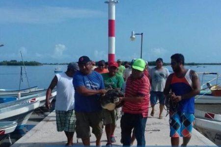 Atrapan enorme cocodrilo en el puerto de San Felipe