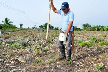 Hacen productivas las tierras donde escasea el agua