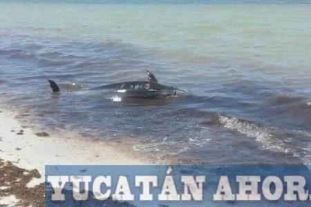 Recala muerta en Santa Clara una delfín y su pequeña cría