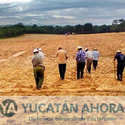 Actualmente los extensionistas son necesarios para ubicar la vocación de la tierra