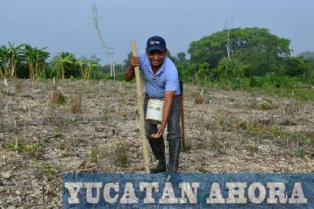 A pesar de pedregoso, el suelo yucateco es redituable para la agricultura