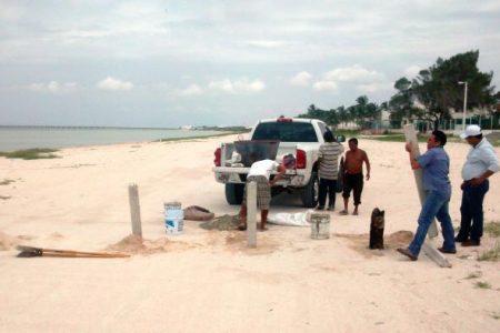 Rápida protección a tortugas que llegaron a anidar en Progreso