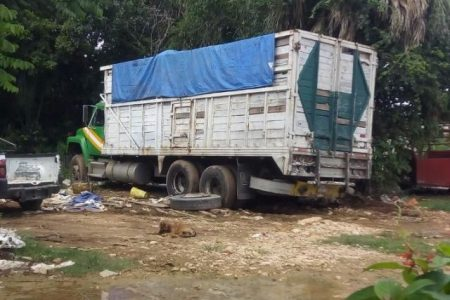 """""""Ecoloco"""" hace sufrir a sus vecinos: acumula excremento de pollos y gallinas"""