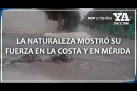 Naturaleza sorprendente en Yucatán: tres fenómenos impactantes