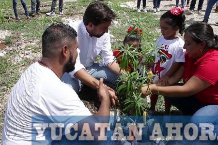 Con unión de esfuerzos reforestan el Paseo Henequenes en Francisco de Montejo