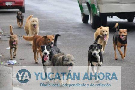 Perros callejeros, vector de Chagas