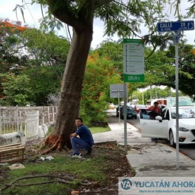 Nuevas estrategias para matar árboles en Mérida