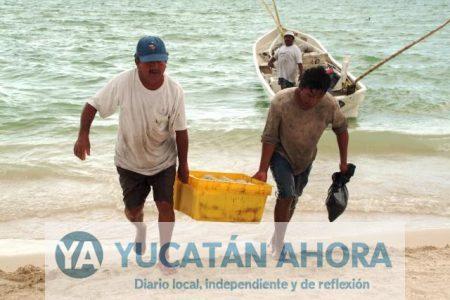 Pescadores aseguran que no se alcanzará la meta de captura de pulpo