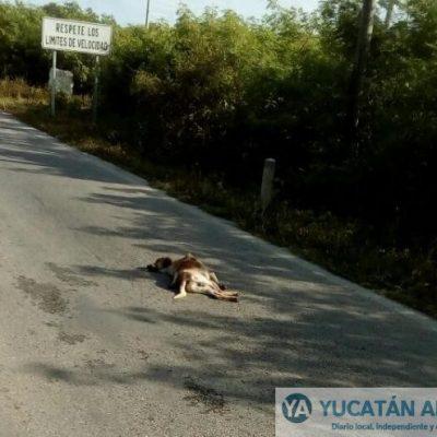 Un perro en su camino, les mostró que su destino era… derrapar