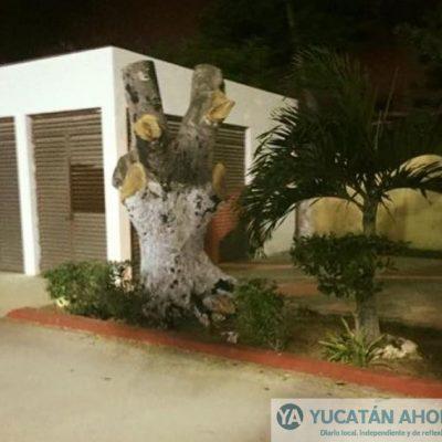 Sin justificación, talan frondoso árbol en el Estadio Salvador Alvarado