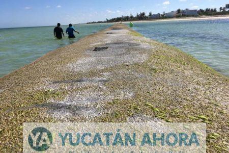 Insisten en colocar más geo-tubos para reducir la erosión costera