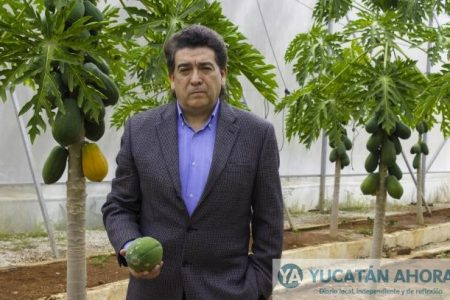 Merida, sede del V Simposio Internacional de Papaya
