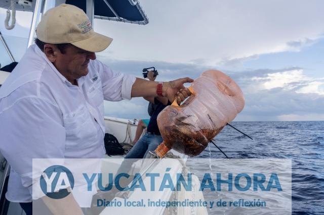 Supervisan proyecto de protección en el Arrecife Alacranes