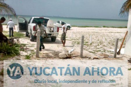 Denuncian en PGR a choferes que atentaron contra nidos de tortuga en Progreso