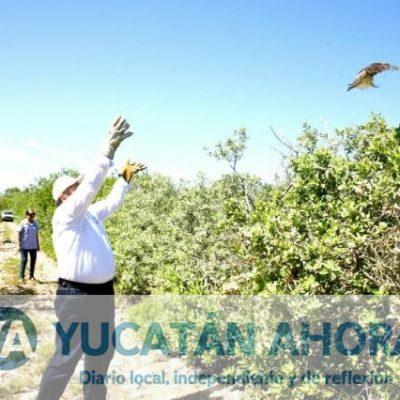 Liberan en Baca fauna silvestre rescatada por SEMARNAT