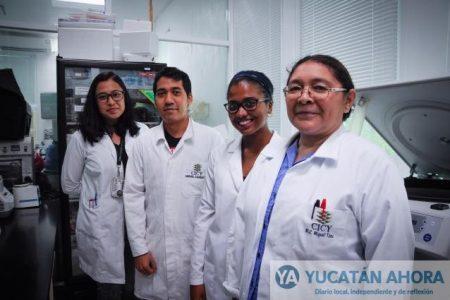 Biotecnología para reducir pérdidas en cultivo de plátano