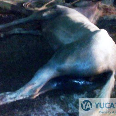 Caballo y perro pierden sus vidas en un frente a frente contra vehículos