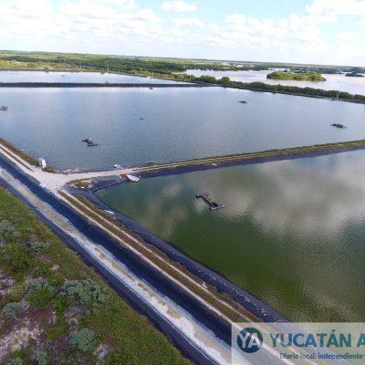 La producción de tilapia es la actividad del futuro según la Sagarpa