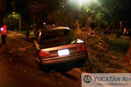 Choferes derriban árboles en descontrolados automóviles