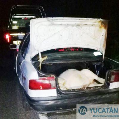 Empleado desleal coordinaba robo de ganado en rancho de Tizimín