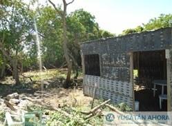 Por construir una casa les valió arrasar con manglar amenazado