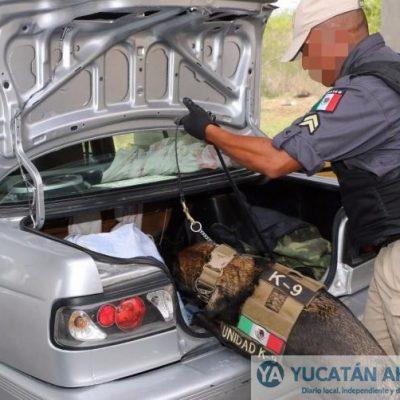 Rumbo a Campeche perro policía les descubre marihuana y crack