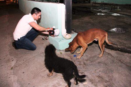 Miles de yucatecos pierden el amor por sus perros y los abandonan en la calle