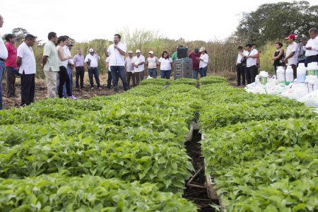 Buscan fortalecer la marca del chile habanero en el mercado mundial