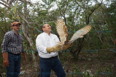 Devuelven animales a la vida silvestre para equilibrar la naturaleza