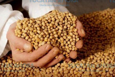 Inauguran planta que almacena 50 mil toneladas de grano