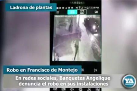 Videocámara delata a ladrona de plantas en oficinas de Francisco de Montejo