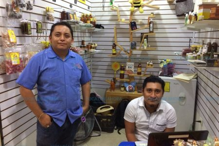 Abejas meliponas revolotean en el corazón de Mérida