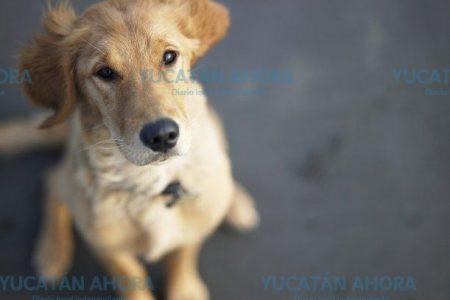 El amor a tu mascota te puede llevar a un secuestro o extorsión