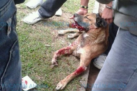 Yucatán insólito: borracho muerde a un perro porque atacó a su suegra