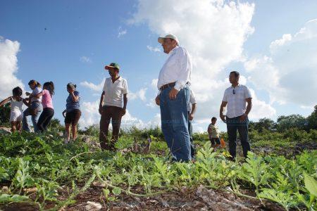 Unas 30 familias de Ticul ya están viviendo de los huertos orgánicos