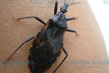 En riesgo de contraer mal de Chagas por alimentos contaminados