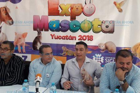 Dos días de convivencia para mascotas y sus dueños en Mérida