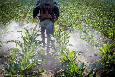 Mujeres del campo yucateco, expuestas a insospechado cancerígeno