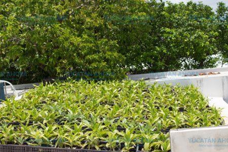 Premian a meridanos que tengan azoteas verdes y paneles solares