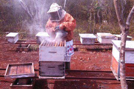 Yucatán se mantiene como el principal productor de miel en México