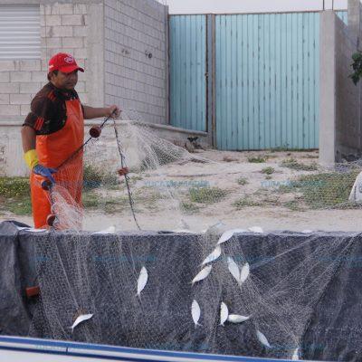 Intentarán reducir el periodo de veda del pepino de mar