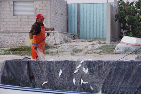 Pescadores piden mini temporada de pepino de mar ante tanta veda de especies