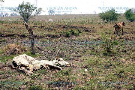 La sequía severa de 2016 y 2017 afectó el 80 % de la superficie la Península