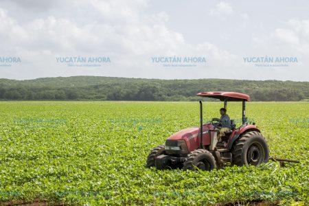 Destinan 182 millones de pesos para el campo yucateco