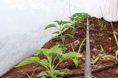 A disposición dinero para mejorar los productos del campo yucateco