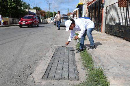 La Península de Yucatán es la región más baja en dengue
