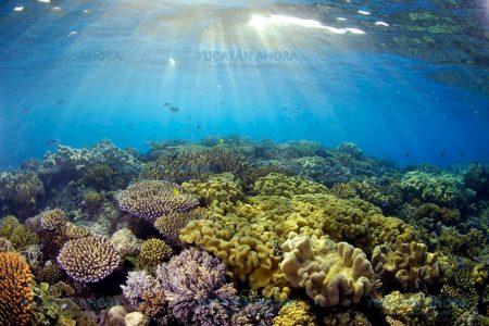 Con esponjas frenan efectos del cambio climático en arrecifes de Yucatán