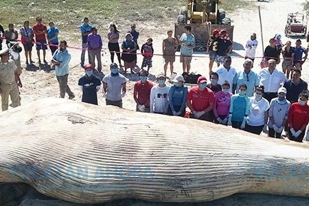 Pescadores, los principales 'asesinos' de delfines en la costa de Yucatán